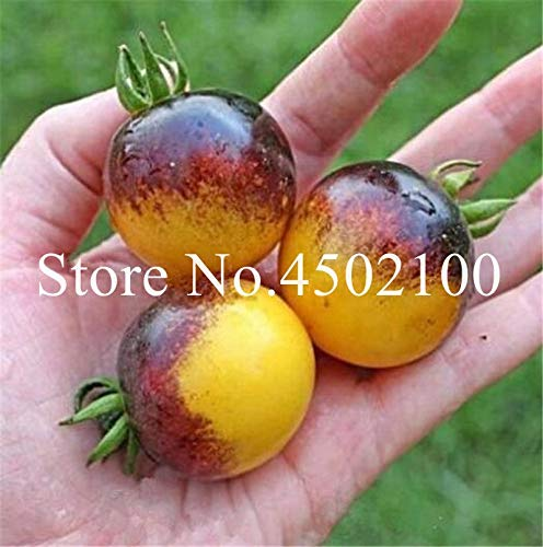 OTOTOP 0000566OT100 26563 Parasole Termico Maxi 175x88 cm Argento