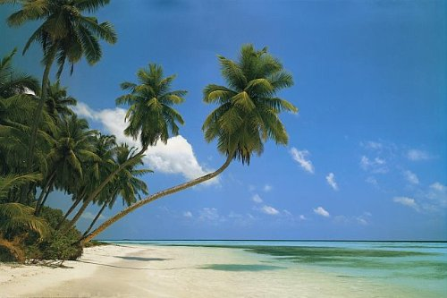 Large Tropical Palm Tree/Beach Scene Poster