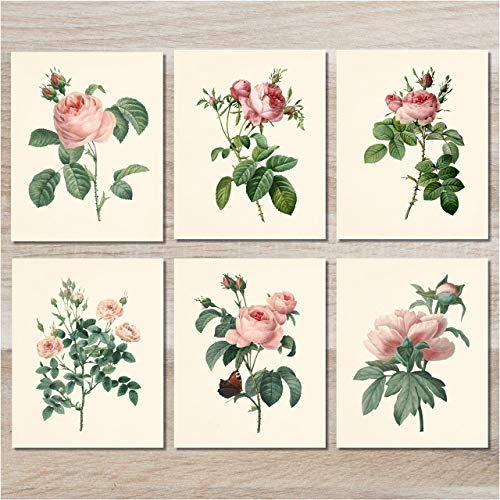 (Flower Wall Art - Botanical Prints (Set of 6) - 8x10 - Unframed - Vintage Floral Decor- Pink Roses)
