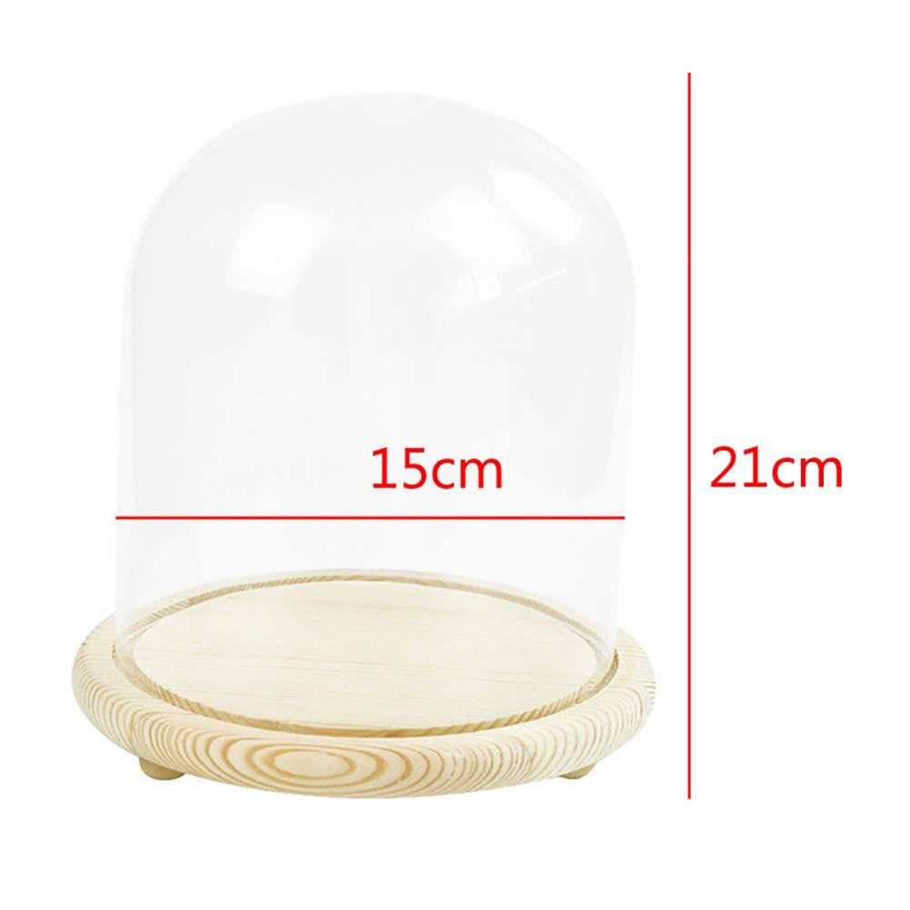 Warmiehomy Cloche en Verre Cloche D/ôme avec Socle en Bois diam/ètre 9 cm, Hauteur 25 cm