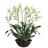 Silk Décor Brassia Plant in Terracotta Pot, 32-Inch, Green