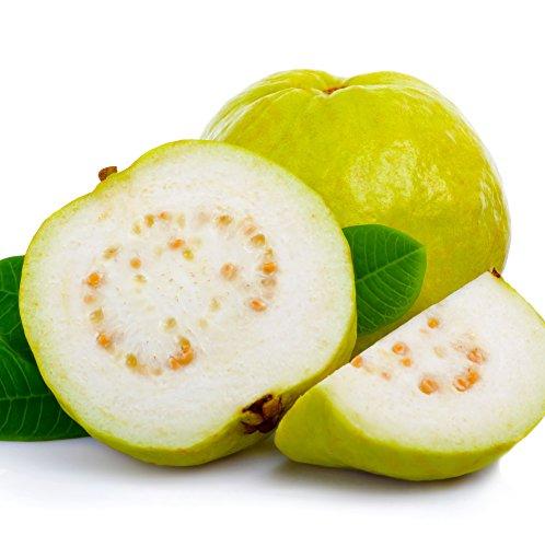 Peruvian White Guava Psidium guajava LIVE PLANT Goiaba, Araçá-goiab by Wellspring Gardens