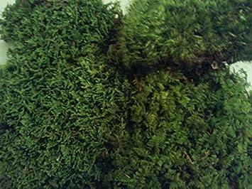 Live Moss Variety Sampler Fern Moss Sheet Moss Frog Moss