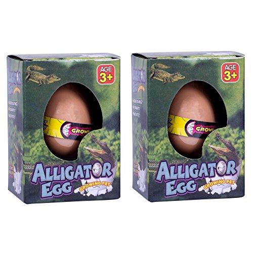Set of 2 Surprise Growing Hatching Alligator Egg Pet Kids Toys, Assorted Colors -