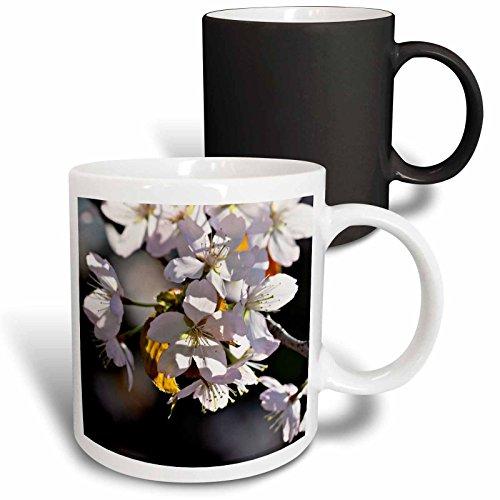 3dRose Alexis Photography - Flowers Sakura Beautiful - Light pink sakura cherry blossom flowers. Dark grey, pink background - 11oz Magic Transforming Mug (mug_286687_3) (Light Three Blossom)