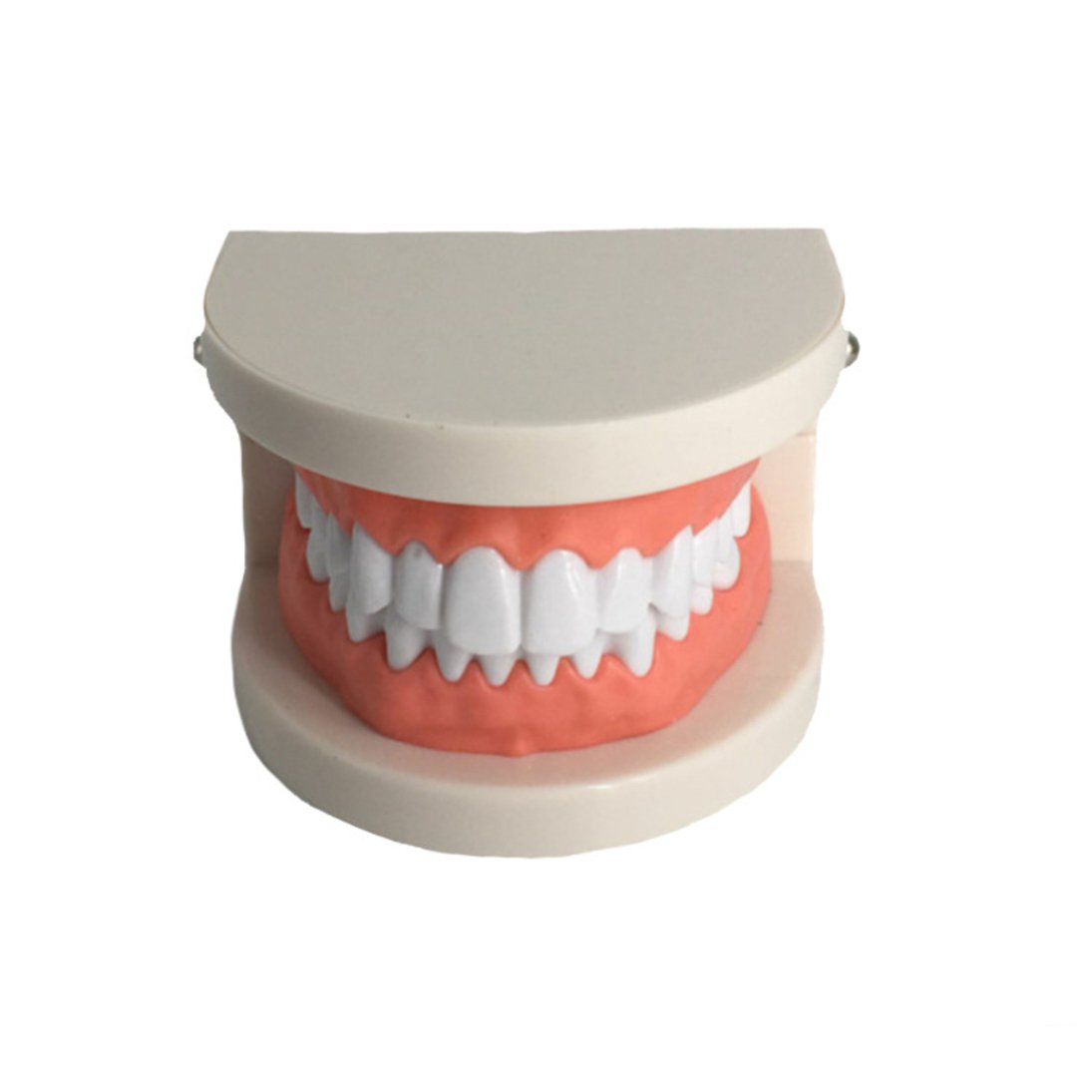 Dental Caries Study Tool Adult Standard Typodont Demonstration Teeth Model for Kids Oral Care Teaching by YOUYA DENTAL (Image #3)