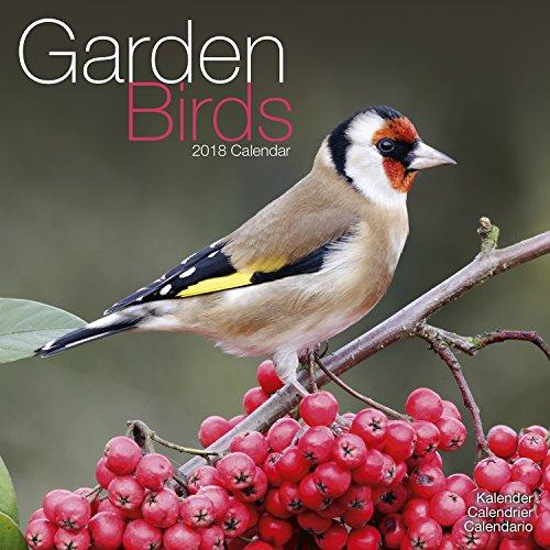 Garden Bird Calendar - Calendars 2017 - 2018 Wall Calendars - Animal Calendar - Garden Birds 16 Month Wall Calendar by Avonside