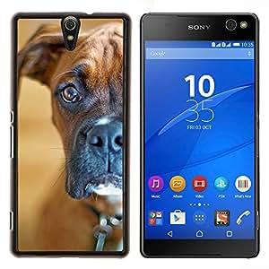 YiPhone /// Prima de resorte delgada de la cubierta del caso de Shell Armor - Boxer fijamente Shorthair Brown Dog - Sony Xperia C5 Ultra