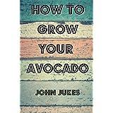 How To Grow Your Avocado