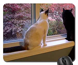 Buddies Cute Cool Decorative Design Animal Cat Mousepad Rainbow Designs