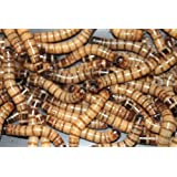 Bassett's Cricket Ranch 1000 Live Super worms