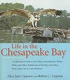 Life in the Chesapeake Bay