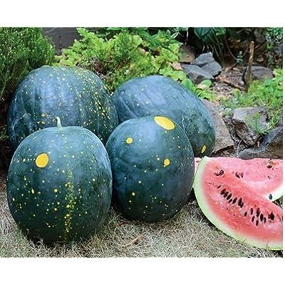 HeirloomSupplySuccess 10 Heirloom Moon & Stars Red Watermelon seeds: Everything Else