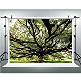 Photography Background,Nature,Photo Backdrop Studio Props,5x6.5ft,The Largest Monkey Pod Tree in Thailand Eastern Green Big Branches Growth Eco Photo