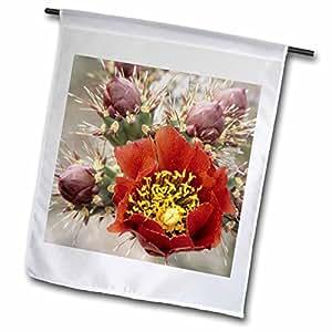 Danita Delimont–flores–staghorn Cholla Cactus con budsm desierto de sonora. Tucson, Arizona.–Banderas