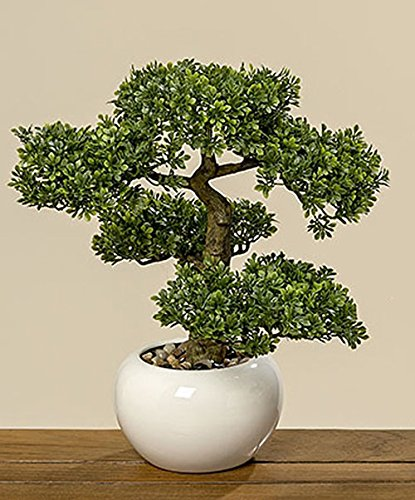 Boxwood Bonsai in Pot Emulate Simulation Decorative Artificial Tree Fake Plants Ornaments Home Decor H 33cm Unbekannt