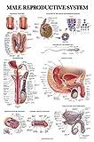 10 Pack - Anatomical Poster Set - Laminated