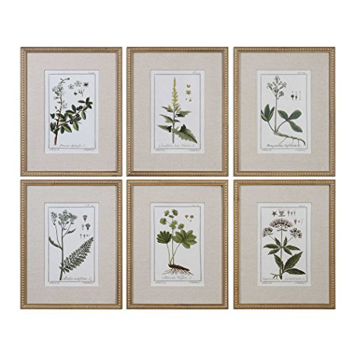 Uttermost' Green Floral Botanical Study Framed Prints - 33651