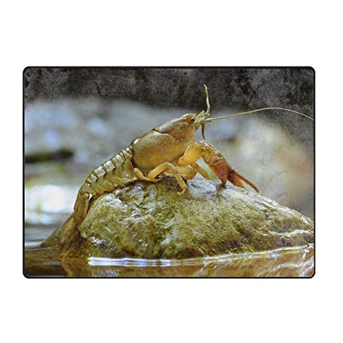 QIUBDSX ShrimpWelcome Floor Doormat Home Decor Durable Non-Slip]()