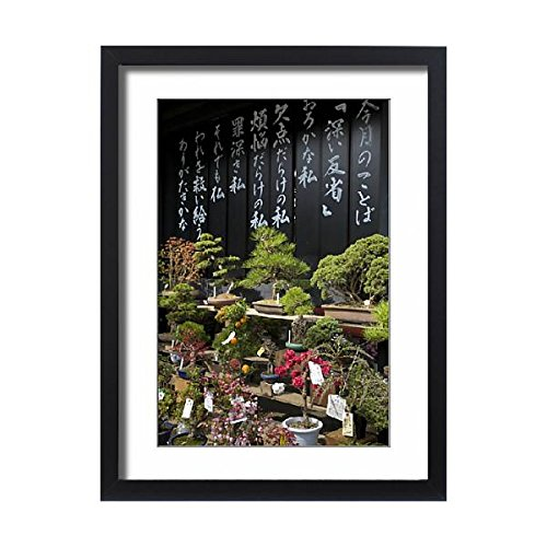 Asia Framed (Framed 24x18 Print of Asia, Japan, Tokyo, display of bonsai trees for sale (12616349))