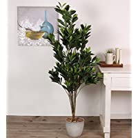 Fourwalls Hide Plant