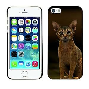 YiPhone /// Prima de resorte delgada de la cubierta del caso de Shell Armor - Abyssinian Javanese Cat Feline Short - Apple iPhone 5 / 5S