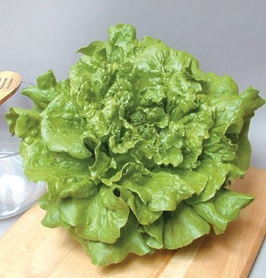 David's Garden Seeds Lettuce Concept D2440 (Green) 500 Organic Seeds