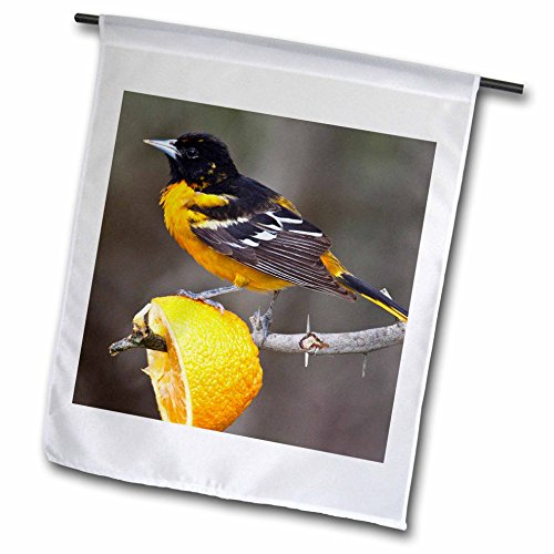 3dRose fl_94471_1 South Padre Island Texas Baltimore Oriole Bird US44 Ldi0230 Larry Ditto Garden Flag, 12 by ()