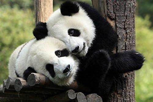 PANDA POSTER Amazing Cute Image RARE HOT NEW 24X36