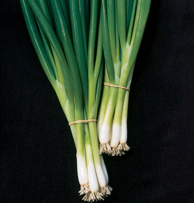 David's Garden Seeds Bunching Onion White Spear D503A (White) 500 Open Pollinated Seeds