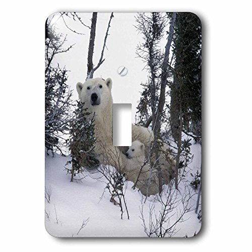 3dRose lsp_70153_1 Manitoba, Churchill. Polar Bear cubs Single Toggle Switch ()