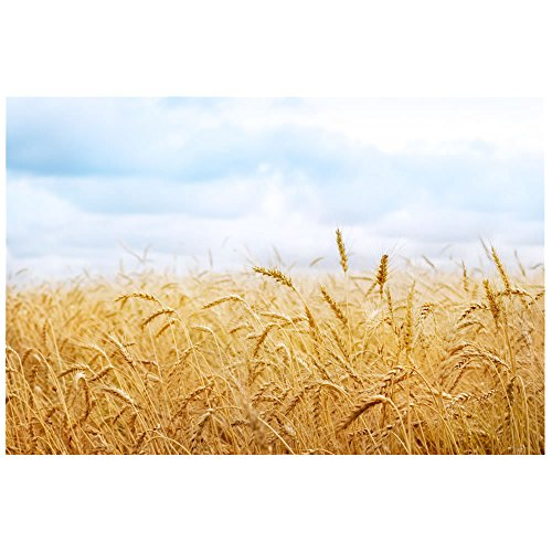 PHSFUBEL Wheat Field Backdrop Background Polyester Backdrops And Props For Photography 5x7ft Background For Professional Photo -