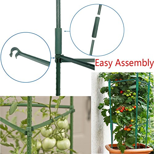 F.O.T 3-Sets Tomato Cage Plant Support Garden Stakes 2ft Long Steel with Plastic Coated Plant Sticks, Sturdy Garden Plant Support Stakes with Connecting Rod (3) by F.O.T (Image #3)