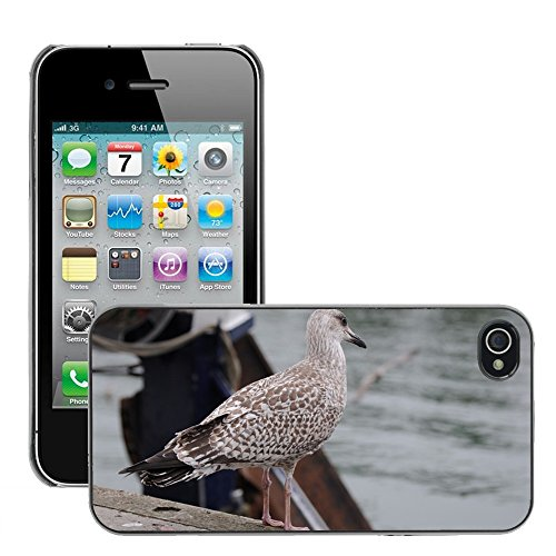 Bild Hart Handy Schwarz Schutz Case Cover Schale Etui // M00133840 Seagull Vogel Sea Port // Apple iPhone 4 4S 4G