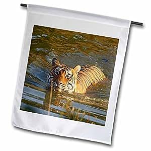 Danita Delimont - Tigers - Royal Bengal Tiger, Ranthambhor National Park, India-AS10 JRA0224 - Jagdeep Rajput - 18 x 27 inch Garden Flag (fl_75668_2)