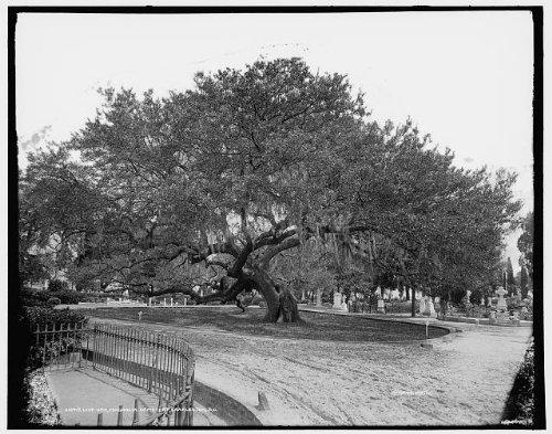 Photo  Live Oak Magnolia Cemetery Burial Grounds Charleston South Carolina Sc C1900