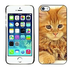 YiPhone /// Prima de resorte delgada de la cubierta del caso de Shell Armor - Maine Coon Ginger Orange Garfield Cat - Apple iPhone 5 / 5S