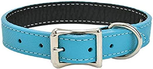 Tuscan Leather Dog Collar by Auburn Leather – Turquoise
