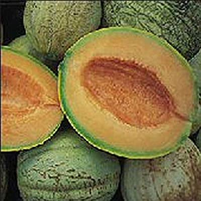 Amish Melon Seeds (40 Seed Pack) : Garden & Outdoor