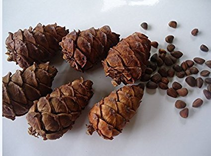 qin chenchen 10 Pieces Tasty Toasty Pine Cone Squirrel Rabbit Chew Treats Toys by qin chenchen (Image #2)