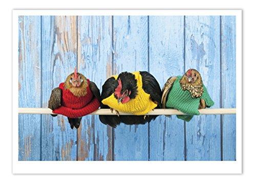 Berkeley Green (Palm Press Inc. - Birthday Card Chicken Sweaters - 1 Card & Envelope - Printed in USA)