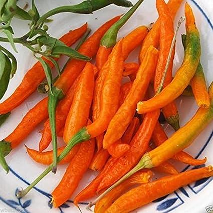 Amazoncom Vistaric Orange Thai Chilichilli Pepper Capsicum