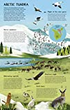 North Pole / South Pole: Pole to Pole: a Flip Book