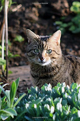 Download A Sweet Tabby Cat Sitting in the Garden Journal: 150 Page Lined Notebook/Diary pdf epub