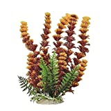 buy AQUATOP AQUATIC SUPPLIES 819603014631 Cabomba Fire Aquarium Plant, 12