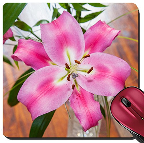Liili Suqare Mousepad 8x8 Inch Mouse Pads/Mat Lilium members of which are true lilies is a genus herbaceous flowering plants growing from bulbs all with large prominent flowers Image ID 22271275 (Growing Lily Bulbs)
