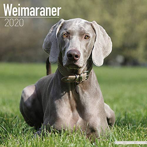 (Weimaraner Calendar 2020 - Dog Breed Calendar - Wall Calendar 2019-2020)