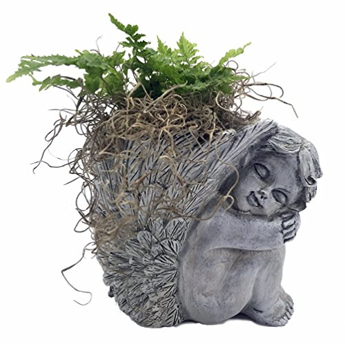 (Cherub Vase Planter with Live Miniature Fern Plant and Spanish Moss - 4