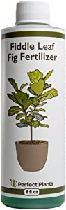 Perfect Plants Liquid Fiddle Leaf Fig Fertilizer   8oz. of Premium Concentrated Indoor Ficus Food   Get Big Leaves and Healthy Plants