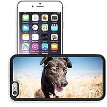 Luxlady Premium Apple iPhone 6 Plus iPhone 6S Plus Aluminum Backplate Bumper Snap Case IMAGE ID: 33884726 Black mixed breed dog outdoor portrait